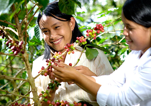 Toarco Toraja is the fruit of our passion pursuing for the best quality.